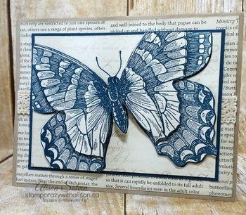 Swallowtail stamp set www.stampcrazywithalison.ca